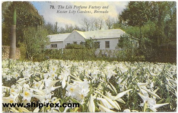 Bermuda, Lili Perfume Factory and Easter Lily gardens - postcard